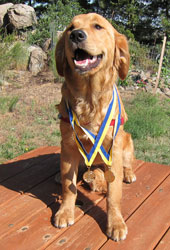 Saca has two S.T.A.R. puppy awards!